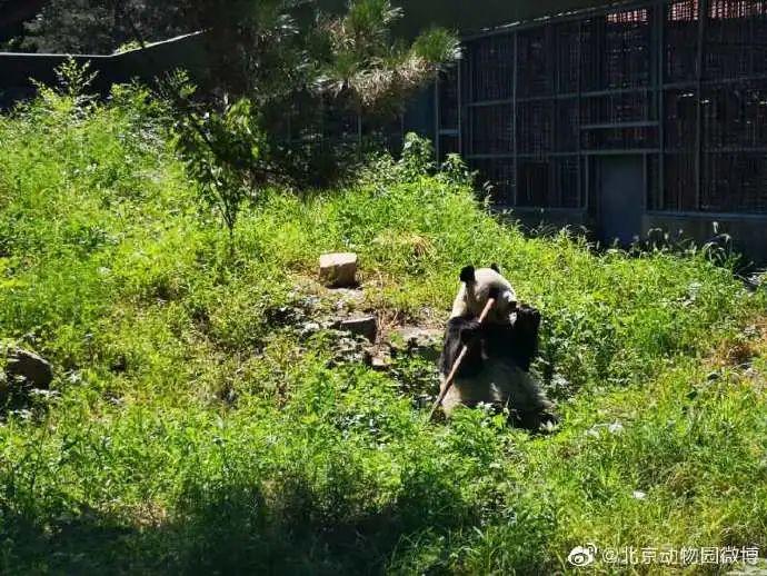 """北京动物园""""大地叔叔""""去世近一个月后,死因公布!网友深情追忆"""
