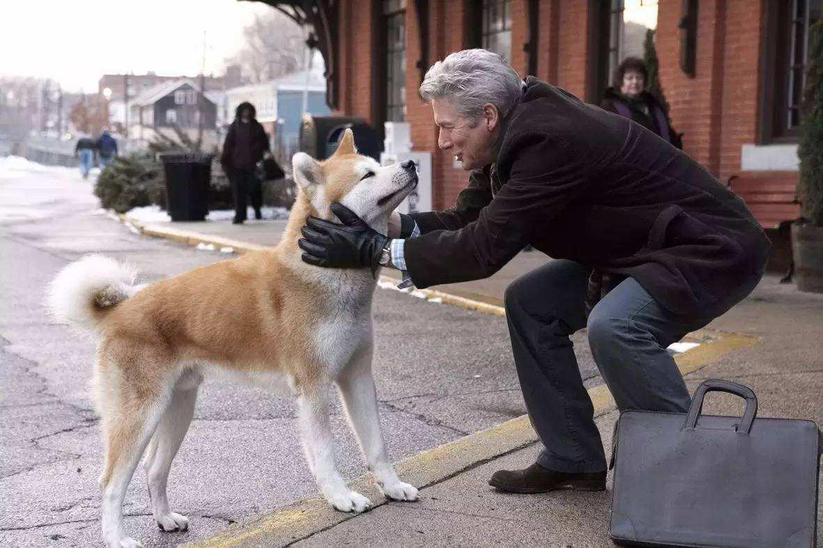 爱宠人士必看!4部宠物电影,赚足了眼泪