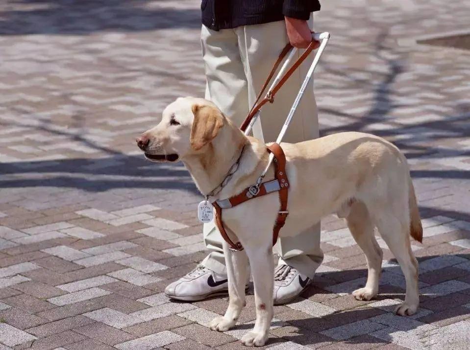 狗狗是色盲吗?它们眼里的世界是怎样的?