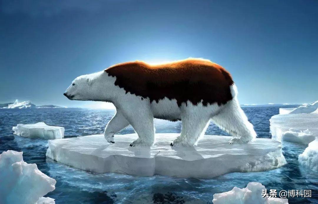 怎么办?气候变化、人类活动,正导致生物多样性和生态系统崩溃