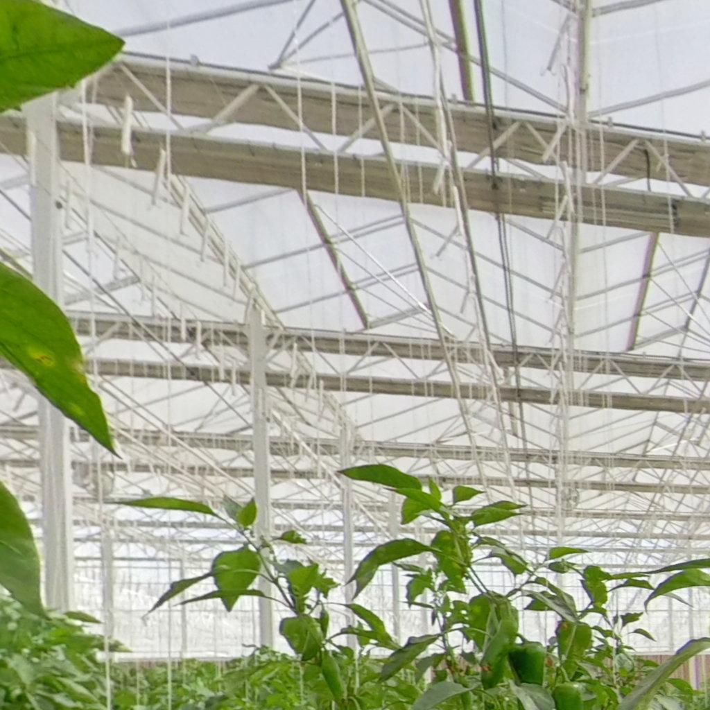 什么是現代化溫室農業?溫室農業為什么要發展水肥一體化灌溉農業