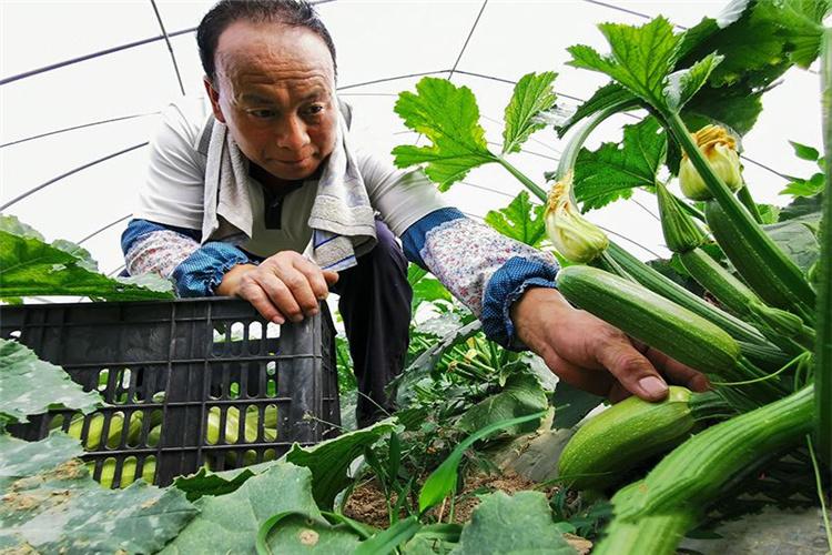 农村种植业,哪些项目有前景,可以长远规划发展呢?