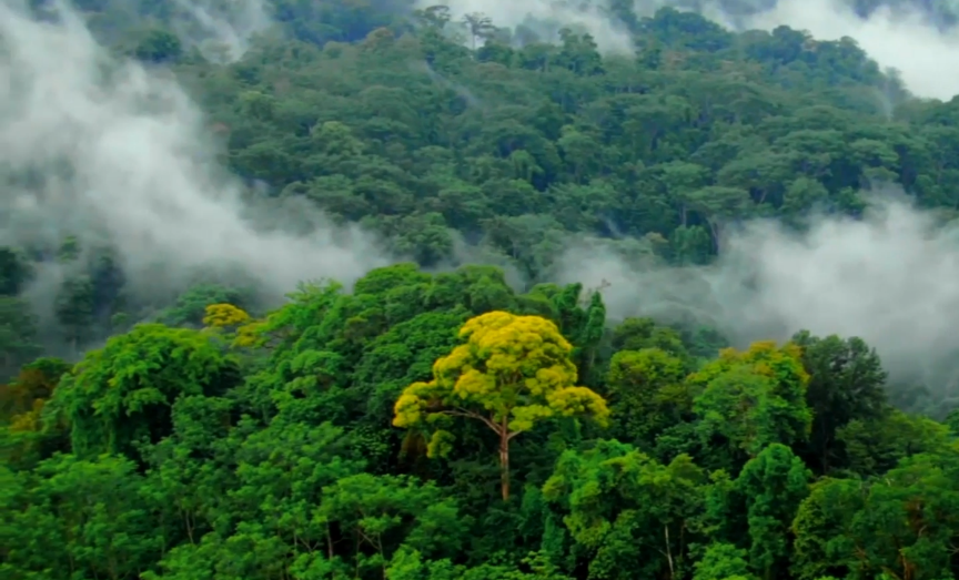 纵横雨林觅踪云乡,海南白沙热带雨林大穿越挑战赛战幕将启