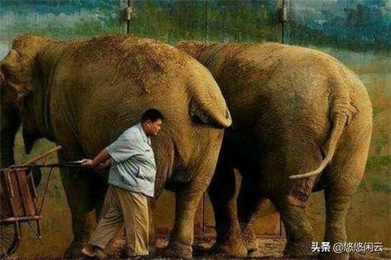 孙越应景庆六一,大象的梗被不断刷屏,和岳云鹏的段子又有新素材