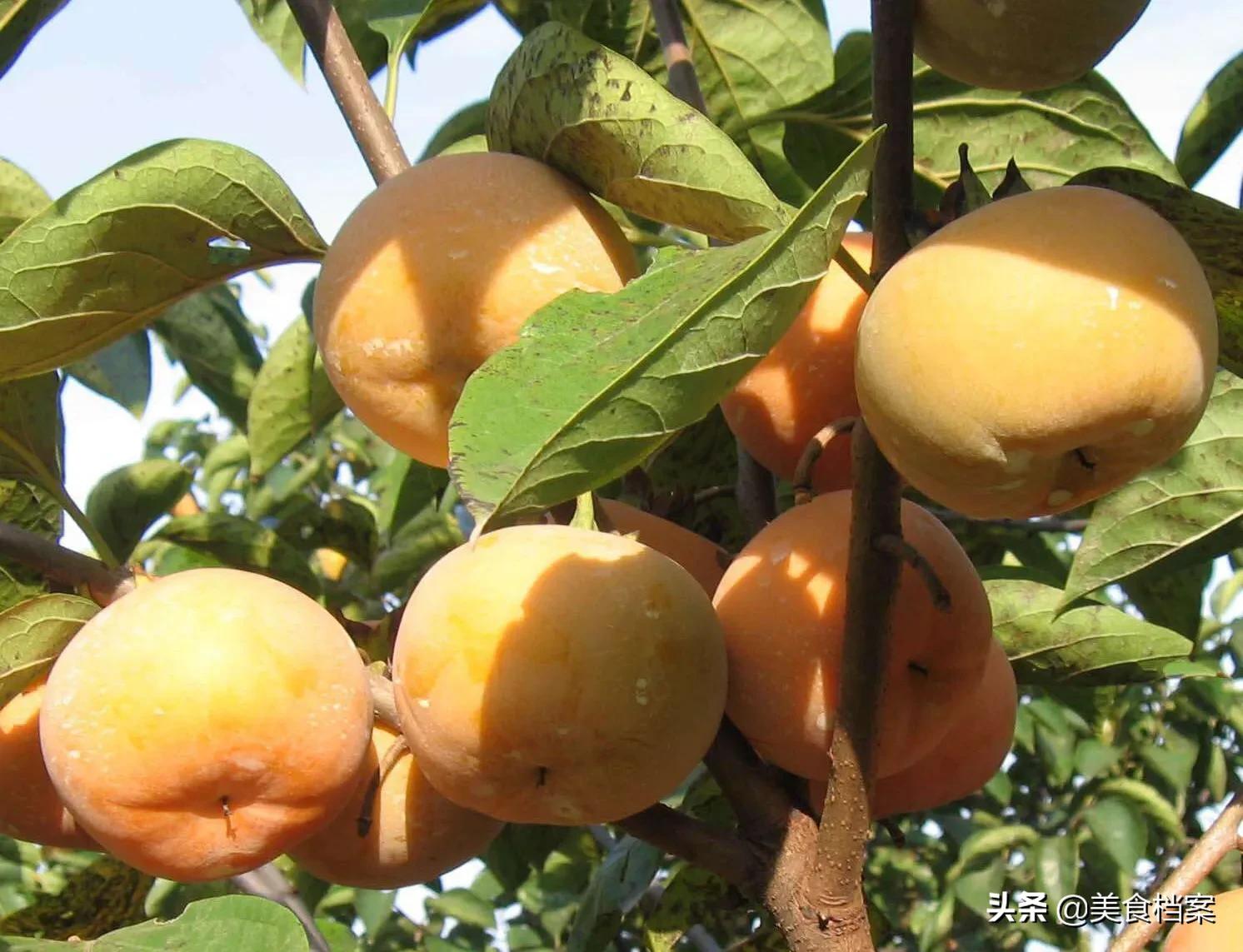 柿子发涩怎么办?老果农教你9种柿子脱涩的简单方法,你选哪种? 家务卫生 第2张