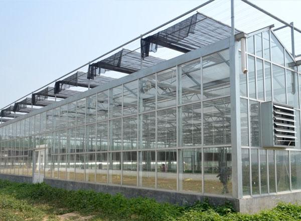 现代化智能温室大棚常见的栽培模式有哪些?哪种效益高