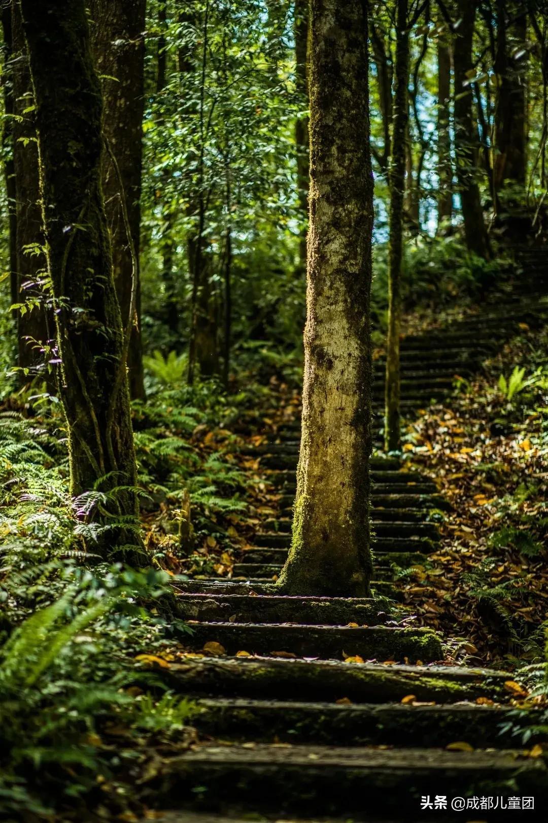 成都周边藏着三个小众森林打卡地,溜娃、避暑、耍水齐活儿了