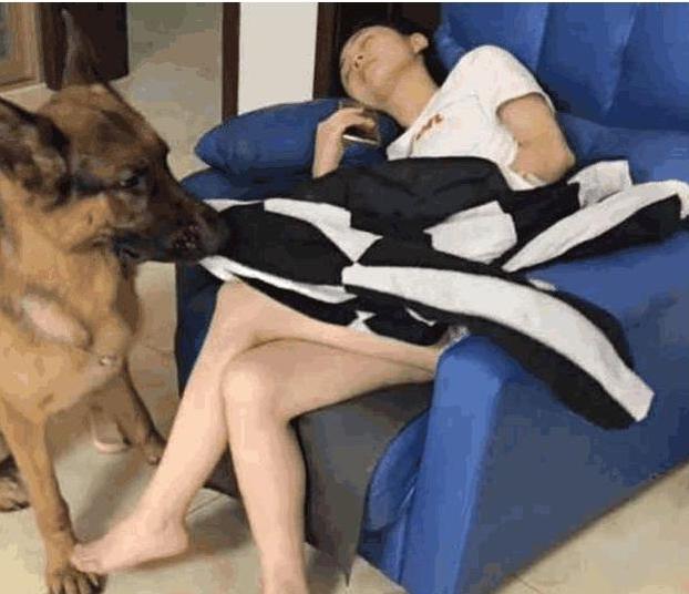 你睡着后狗狗会做什么?如果做这5件事,说明你没白养它