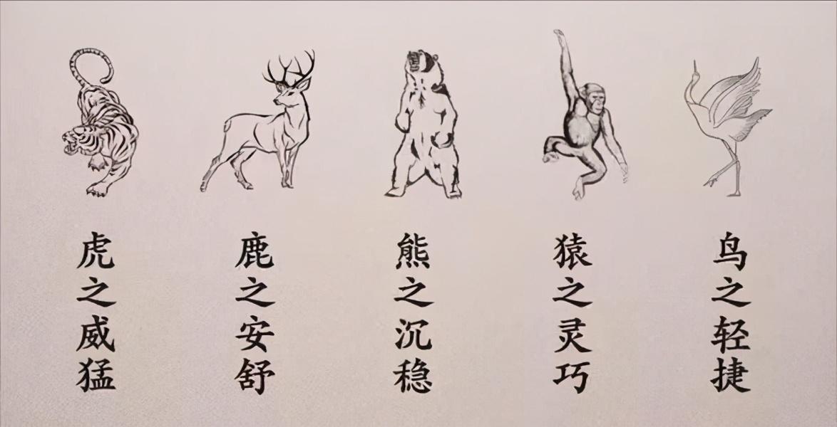 五禽戲為什么沒人練(五禽戲分解動作圖)