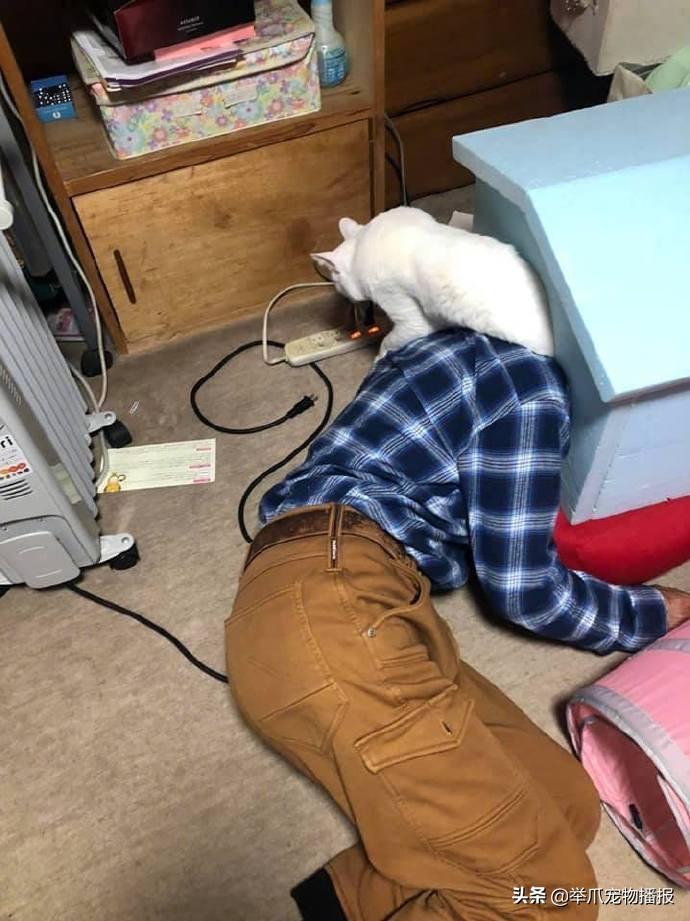 尴尬!失踪的猫咪找回后,又跑回来只一模一样的猫