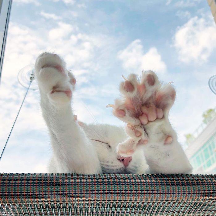一隻被遺棄的殘疾雙色瞳孔貓,被新主人收養後,搖身一變成網紅