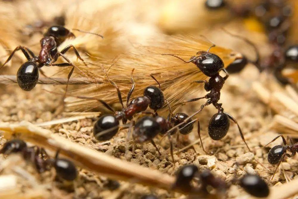 管窥蚂蚁集团的蚁群战略