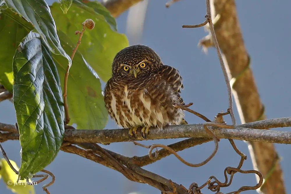11天云南西部拍鸟之旅收获185种鸟类!满载而归