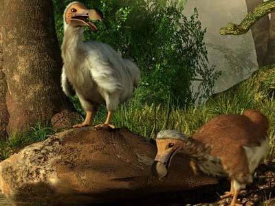 """史上最""""憋屈""""的鸟,绝种后才出名,而且不是被人吃光的"""