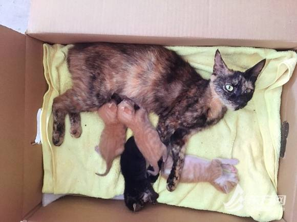 TNR调查|上海民间组织2年为上千只流浪猫做绝育,推广难在哪?