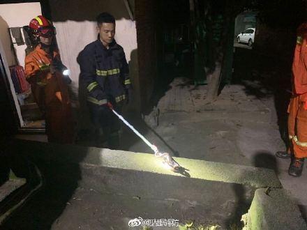 江西多地居民区有蛇出没 消防提醒看到后莫慌