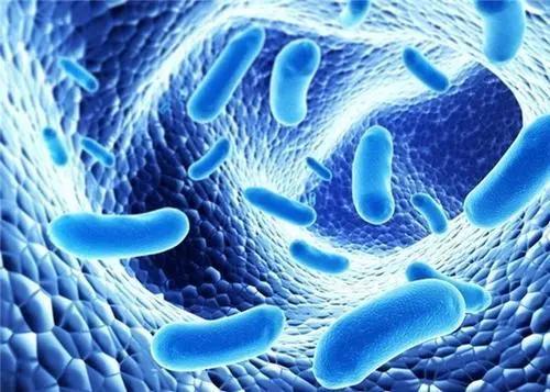 细数那些鲜为人知的人体细菌群落的秘密