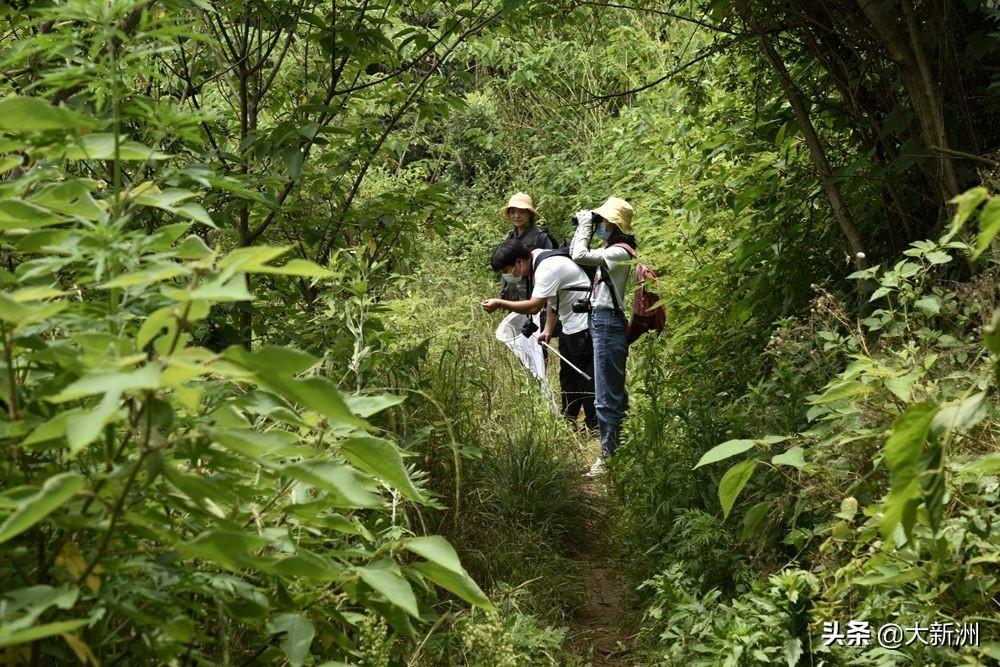 武汉启动涨渡湖湿地生物多样性调查与评估