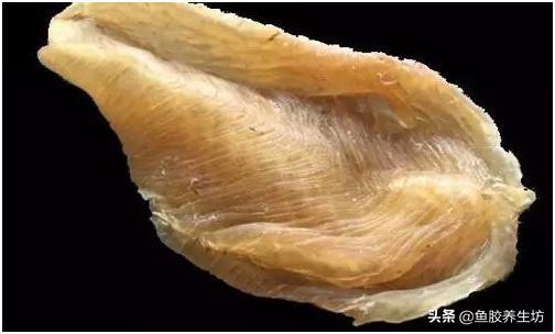 鱼胶知识系列一鱼胶基本认识