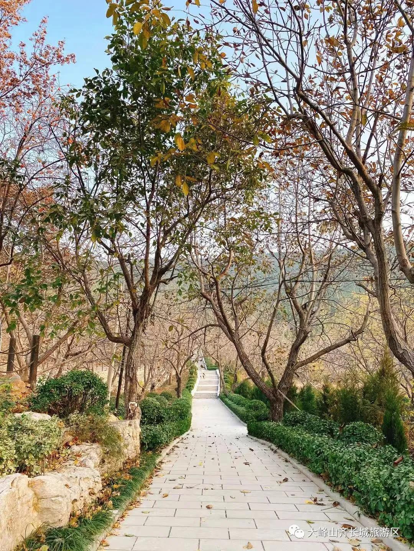 秋冬绿意,盎然而生 这个冬天济南大峰山有很多美好的故事等你来听
