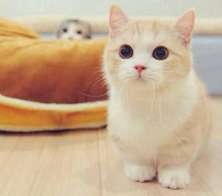 宠物店老板说漏嘴,这6种猫最多人买,温顺还粘人