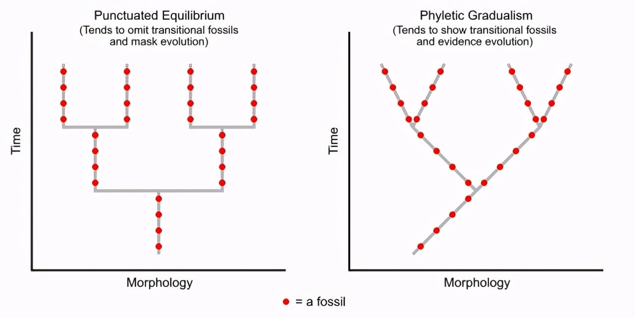 进化论解释不了?为什么2亿年来鳄鱼几乎没有发生变化?