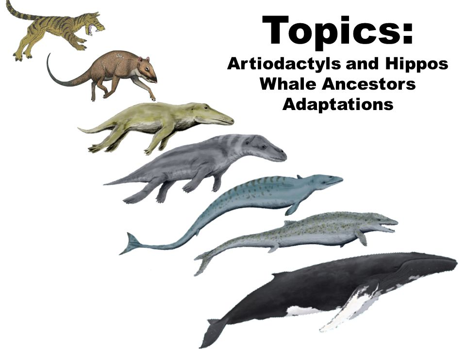 埃及发现远古四足鲸鱼化石(死神鲸演化有多传奇?)