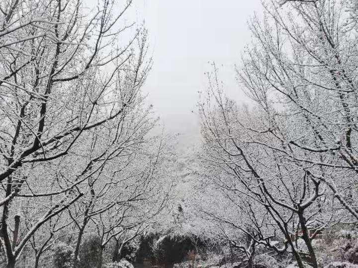 美不胜收!济南红叶谷景区迎来今冬第二场降雪