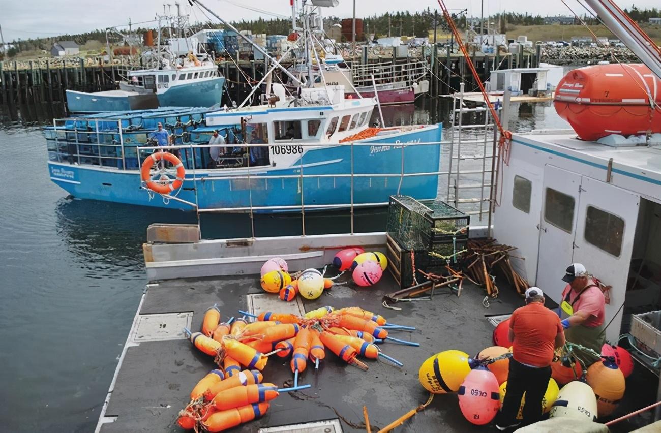从手持鱼叉到大型渔船,加拿大四百年龙虾捕捞进步史