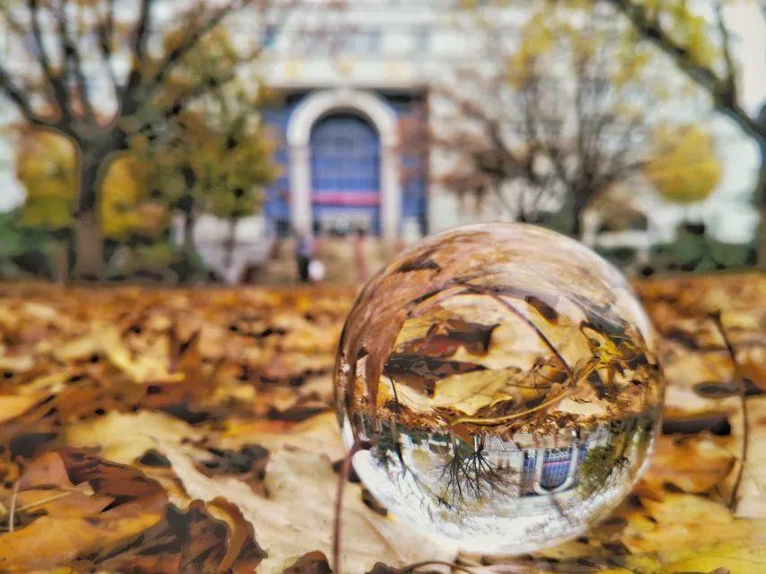 绝美!济南这么美妙的赏秋地居然在校园,很多人都忽略了!