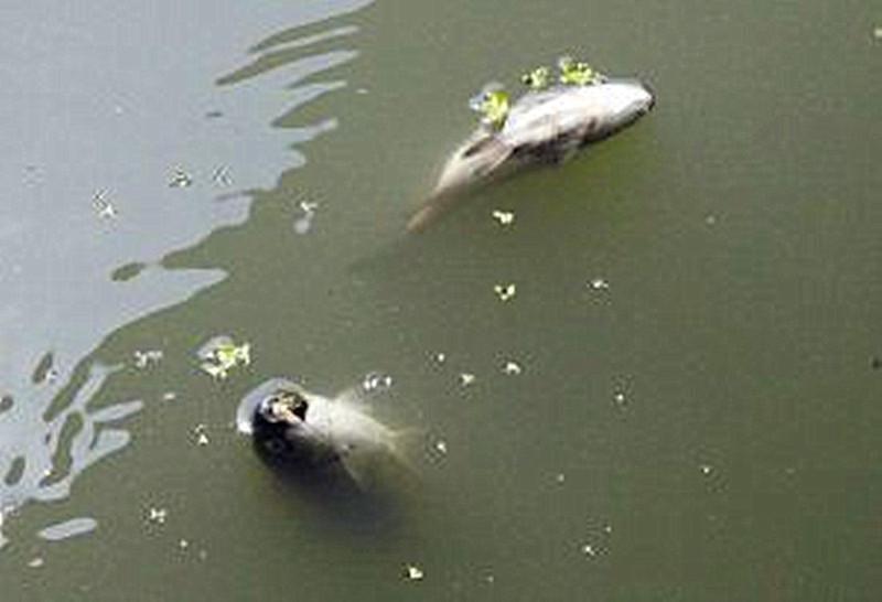 浅析鱼病防治的合理用药:
