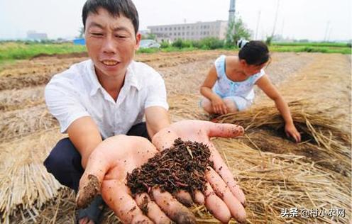 新农业创业项目有哪些(农村创业干啥最赚钱)插图(16)
