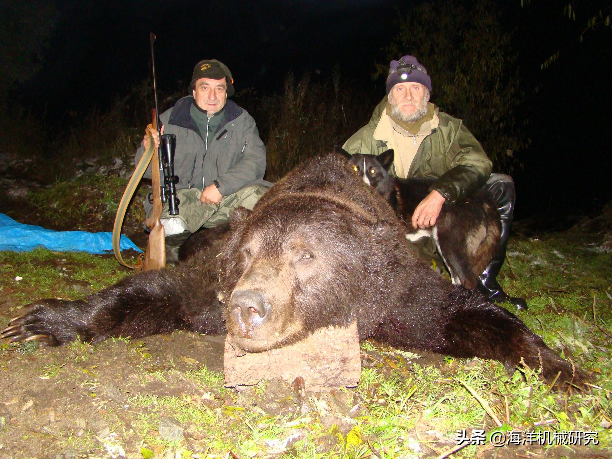 带崽母熊被枪杀引众怒,俄罗斯政府为何鼓励海军这么干?