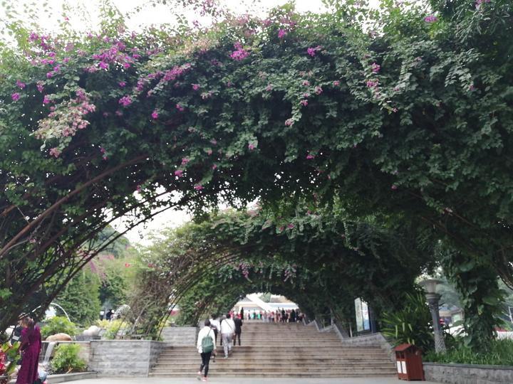 南宁这个5A景区漂亮了很多,还对外省游客免票