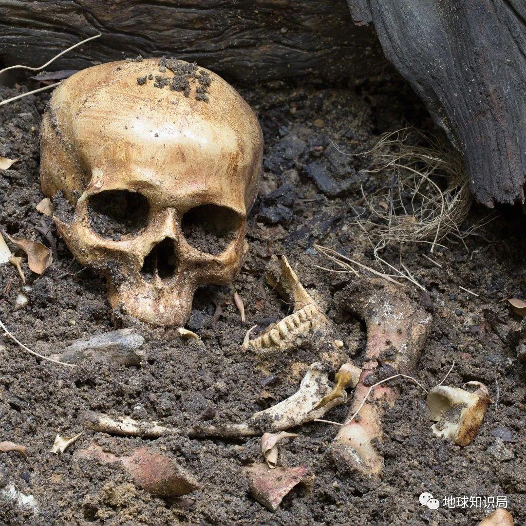 印度人骨贸易:活人的价值竟然比不过一具死尸