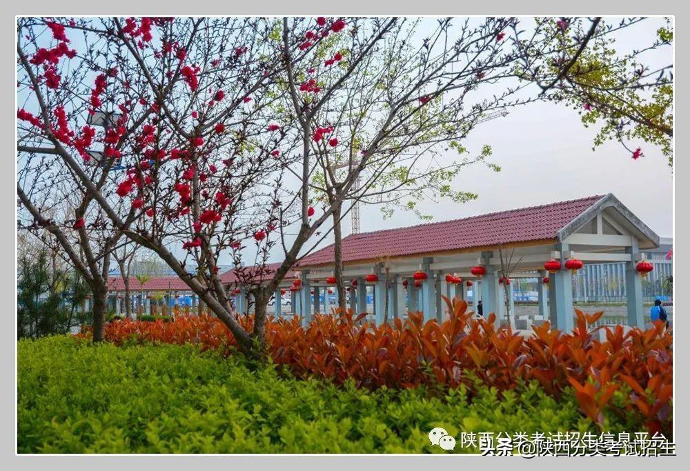 渭南-华山风骨 渭水襟怀 | 渭南职业技术学院