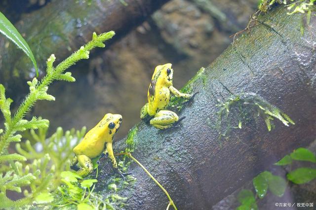 常见的两栖动物有哪些(两栖动物大全品种)