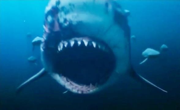 丈夫浮潜被近3米牛鲨死死咬住,海面血红,孕妻奋不顾身跳水救夫