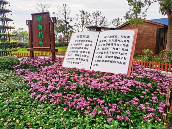 湖北省蔡甸区:金秋菊展 秋天最美的风景