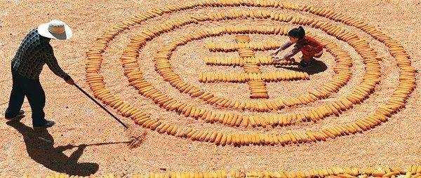 2021年,中国农业就传来重大消息,种子芯片不再受制于人