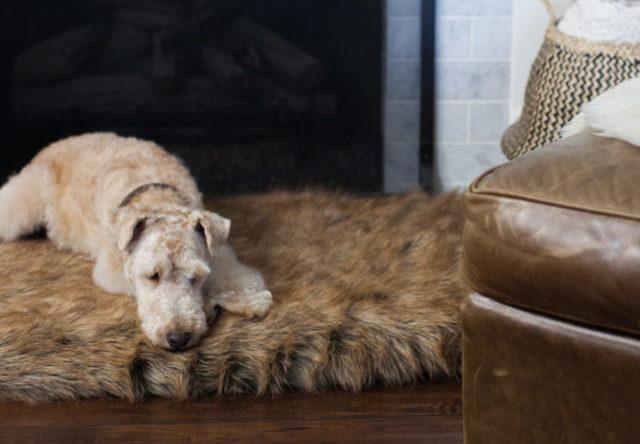 老年犬睡觉时间长,如何给老狗选合适的床,让狗狗睡得好