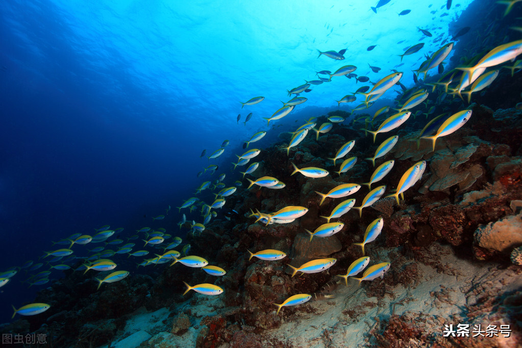 萬米海底的世界,三個理由讓你覺得海底恐懼