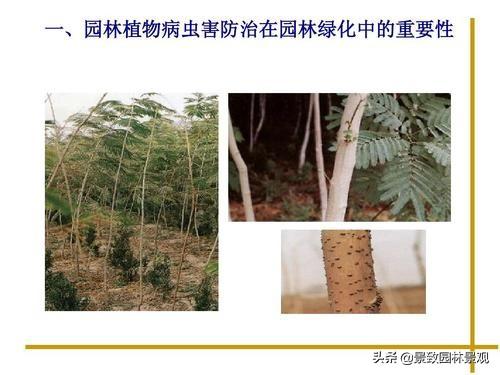 园林植物常见病虫害汇总(收藏篇),或许对你有用!持续更新 病虫害 第3张