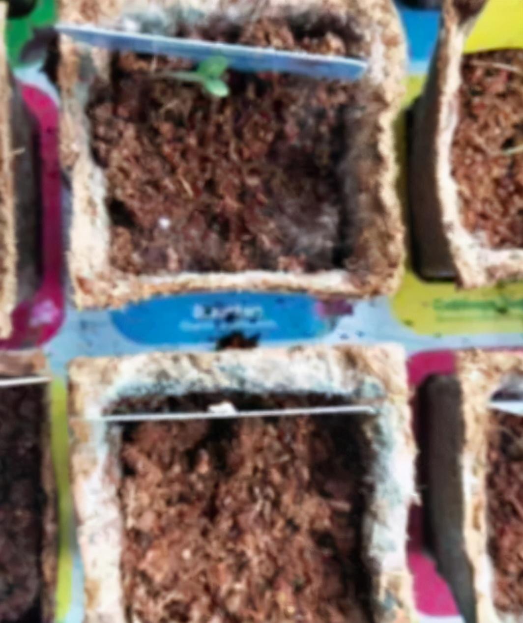华人注意!澳洲国民超市赠送的网红小盆栽带毒,可能伤害到宠物