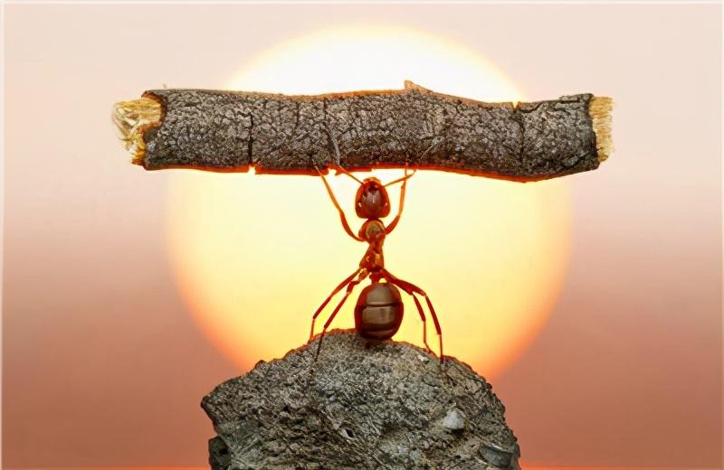 """六年前的忠告:马云的那只""""蚂蚁"""",本就不必撼动大树"""