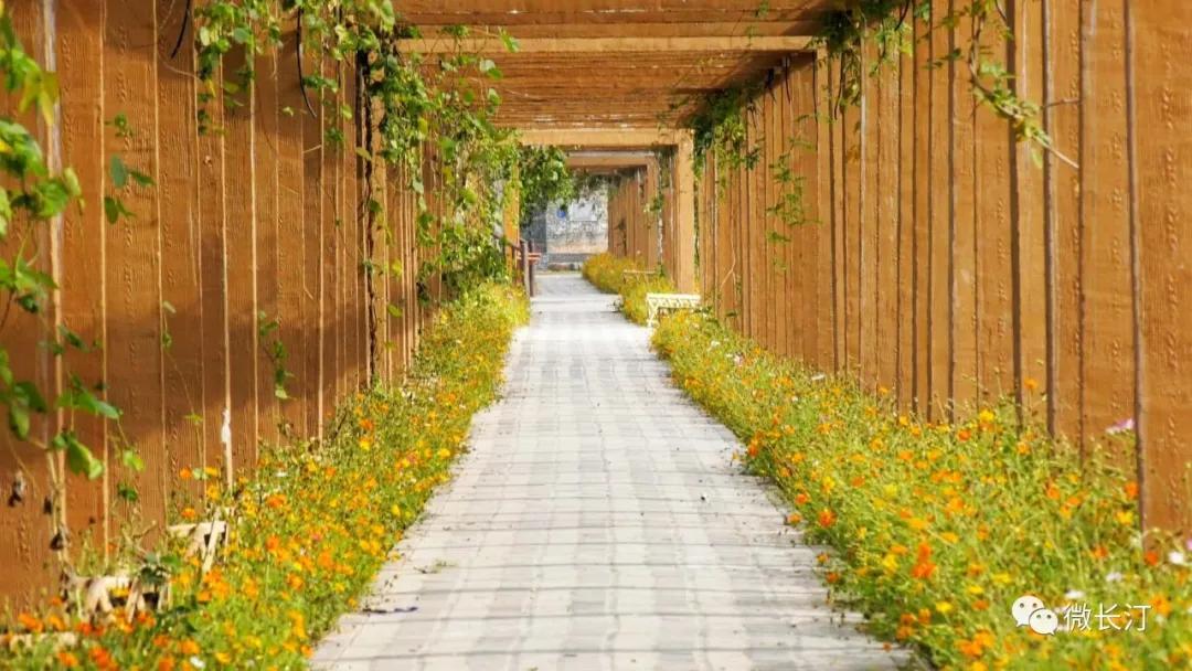 长汀县三洲镇:串点成线 打造生态旅游精品路线