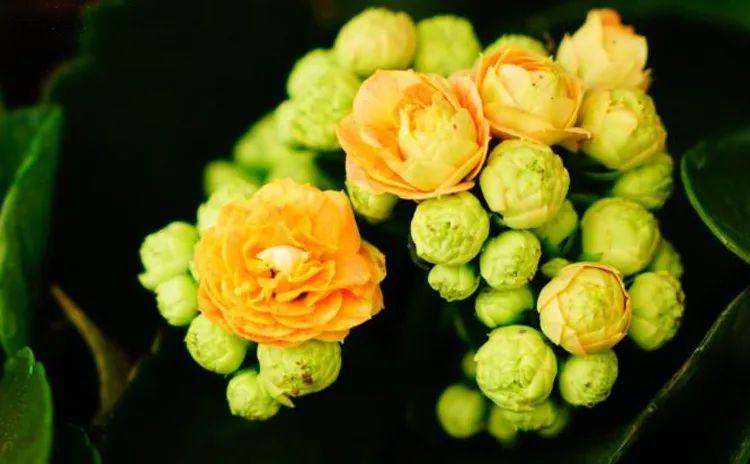 想要把花卉拍好,摄影师的这些拍摄技巧你一定要知道