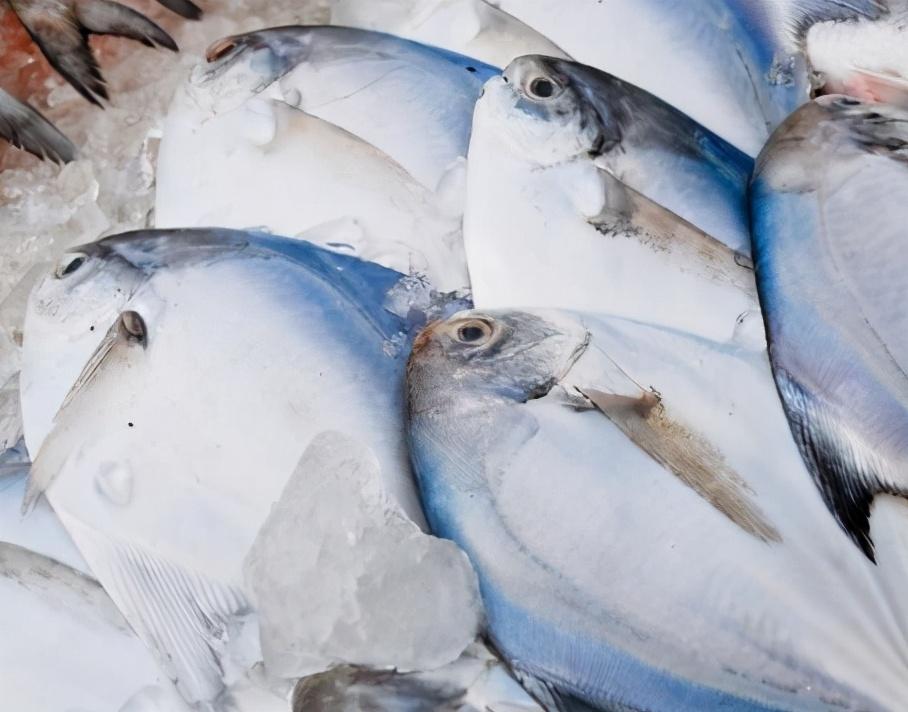 适合春天吃的5种鱼 鲜嫩肥美