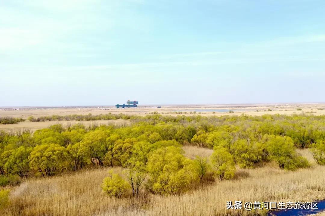 【黄河口生态旅游区】春•色
