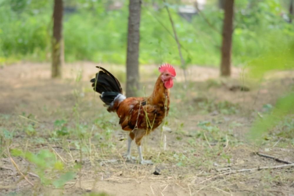 """从""""跑鸡""""谈安全生产目标的确立"""